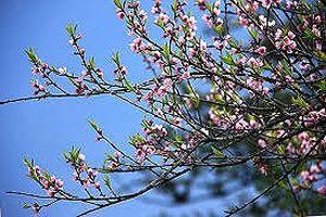 Mùa xuân đẹp lắm người ơi, có hình bóng mẹ rạng ngời sắc xuân!