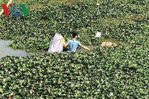 Hải Dương thông tin chính thức về thi thể phụ nữ trên sông Cẩm Giàng