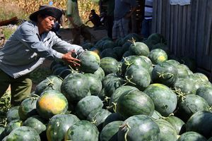 Trung Quốc thay đổi sản xuất, doanh nghiệp nông sản Việt cần làm gì để giảm thiểu rủi ro?