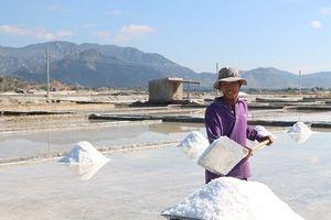 Chùm ảnh: Nông dân tỉnh Ninh Thuận chọn ngày đẹp ra đồng đầu năm