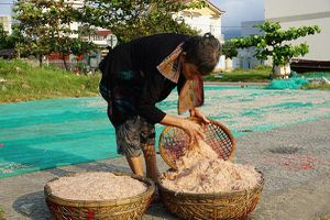 Ruốc - Lộc biển của ngư dân Sơn Trà