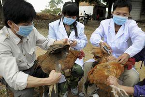 Xác định chủng virus cúm khiến 2 bệnh nhân viêm phổi nặng