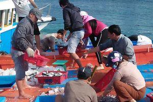 Ngư dân Lý Sơn trúng đậm cá cơm!
