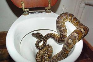 Hết hồn loạt 'quái thú' kỳ dị án ngữ trong nhà vệ sinh