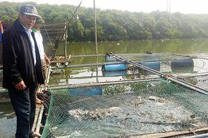 Thu tiền tỷ nhờ nuôi cá lồng bè, người dân xóm chài kéo dài ngày Tết