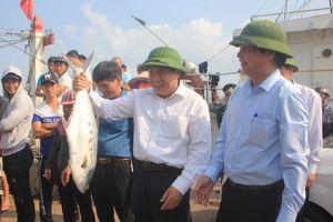 Quảng Trị: Ngư dân trúng đậm mẻ cá khủng đầu năm hơn 8 tỷ đồng
