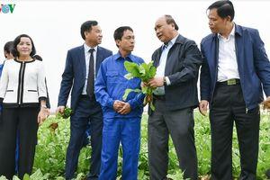 Thủ tướng: Nông nghiệp có thể trở thành 'đòn bẩy' chiến lược