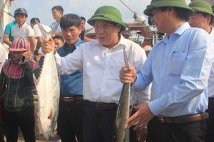 Ngư dân Quảng Trị đánh bắt được mẻ cá bè gần 140 tấn ngay đầu năm