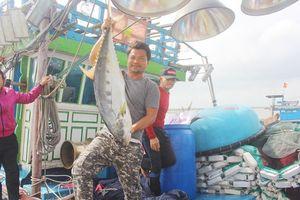 Gặp người trúng hơn 120 tấn cá bè vàng