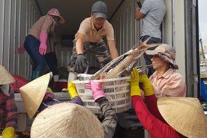 Cảng nam Cửa Việt nhộn nhịp 'đón' mẻ cá 120 tấn vào bờ