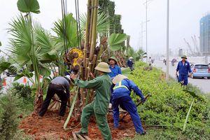 Bảo đảm Tết trồng cây thiết thực, hiệu quả, không hình thức