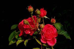 Valentine 14/2: Lời chúc ngọt ngào cho những người đang yêu