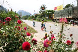 Phố núi Con Cuông trồng thêm 6 đường hoa và nhiều cây cảnh