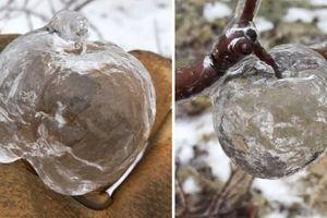 Nhiệt độ tại Mỹ tiếp tục hạ thấp, những 'quả táo ma' xuất hiện trên cây