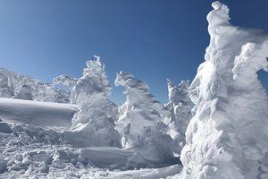 Khu rừng 'quái vật tuyết' thu hút du khách tại Nhật Bản