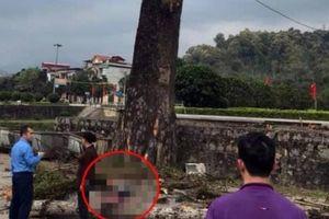 Đi bộ trên đường, thanh niên bị cành cây rơi trúng đầu tử vong