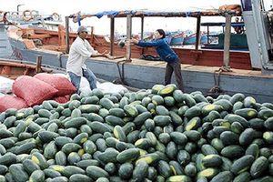 Trung Quốc đưa ra nhiều điều kiện với dưa hấu Việt Nam