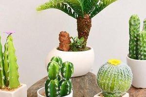 Những loại cây tiêu hao tài lộc không nên trồng trong nhà