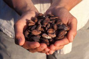 10 lợi ích của sôcôla đối với tim mạch và sức khỏe