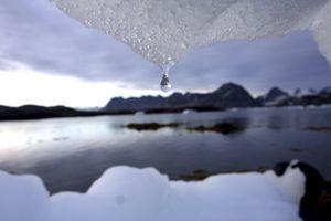 Trộm nước băng sản xuất vodka trị giá 9.000 USD ở Canada