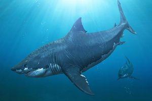 Hé lộ nguyên nhân loài cá mập lớn nhất trong lịch sử tuyệt chủng