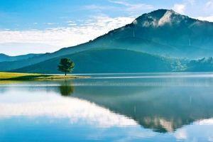 Lâm Đồng: Huyện, Vườn... cãi nhau điểm du lịch 'Cây thông cô đơn'