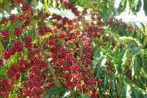 Xuất khẩu đầu tiên, ngành nông nghiệp thu về 3,2 tỉ USD