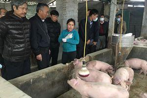 Trên 'nóng' dưới 'lạnh' trong chống dịch bệnh trên gia cầm, gia súc