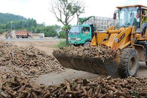 Nhiều giải pháp cho xuất khẩu sắn