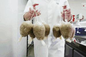Haggis - món dồi Scotland chứa nội tạng cừu được làm như nào?