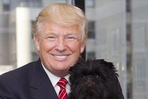 TT Trump phá vỡ truyền thống nuôi chó hơn 120 năm qua ở Nhà Trắng