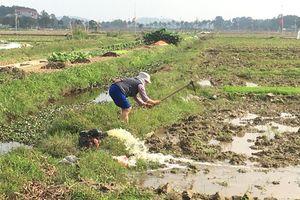Hà Nội: Mực nước sông Hồng thấp, 8.000ha vẫn chưa có nước