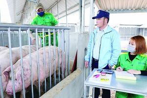 Chăn nuôi nỗ lực vượt 'sóng' CPTPP