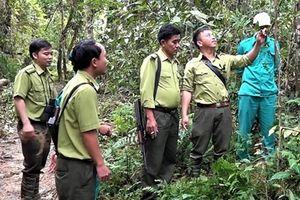 Tuần tra giữ rừng, bảo vệ cây dược liệu