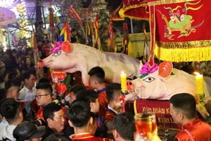 Chen chân ngắm 'ông Lợn' ở La Phù