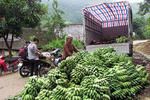 Sức sống trên vùng đất biên giới Lai Châu