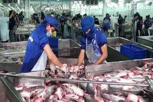 Xuất khẩu cá tra nỗ lực đạt 2,4 tỷ USD trong năm 2019