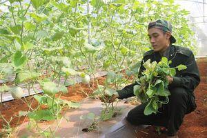 Những thách thức của nông dân Quảng Trị trong thực hiện công nghệ 4.0