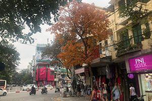 Phố phường Hà Nội đẹp dịu dàng với mùa cây thay lá