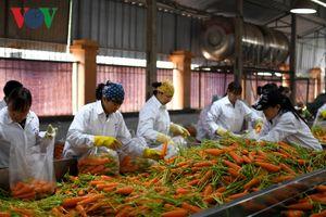 Liên kết và chế biến là chìa khóa của tăng trưởng xuất khẩu nông sản