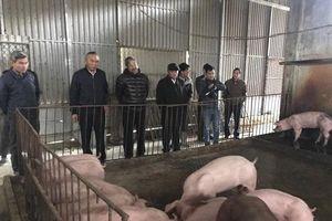 Bộ NN-PTNT chỉ đạo quyết liệt phòng chống bệnh dịch tả lợn châu Phi