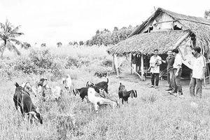 Những hộ nông dân nghèo vươn lên làm giàu