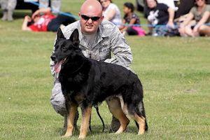 Khám phá sửng sốt về những chú chó nghiệp vụ Mỹ