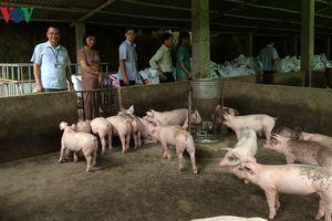Bệnh lở mồm long móng xuất hiện trên 350 con gia súc tại Bắc Kạn