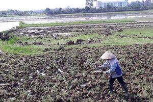 Mê Linh còn hàng trăm héc ta chờ nước đổ ải