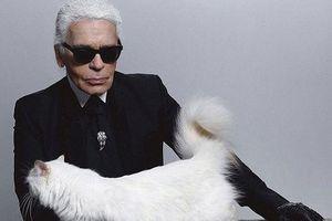 'Cô mèo' của huyền thoại Karl Lagerfeld có cuộc sống như 'bà hoàng'