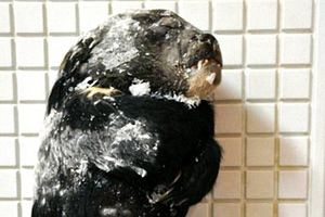 Tăng cường kiểm tra các nhà hàng để bảo vệ động vật hoang dã