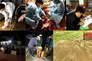 Ứng phó khẩn cấp với dịch tả lợn châu Phi