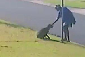 Người đàn ông dụ dỗ rồi túm cổ và đấm chó một cách tàn bạo