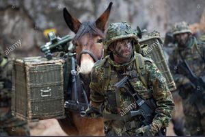 Quân đội Đức vẫn sử dụng ngựa để thồ hàng chuyên dụng